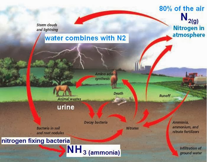 global nitrogen cycle