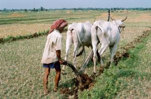 Khmer single bottom plow Kandal Province, Cambodia